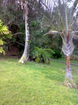 Dr Rupar's Mana Kea Gardens nature retreat grounds surounding the Lava house rejuvenation center